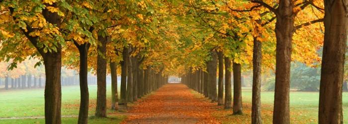 HM Autumn