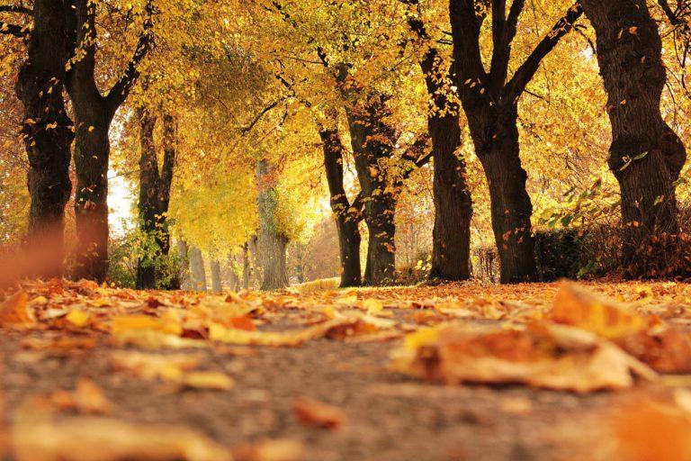 Clove bud oil to keep autumn colds away