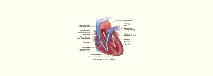 Heart matters: men vs. women