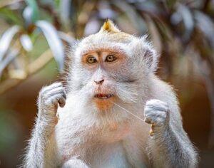 white monkey flossing